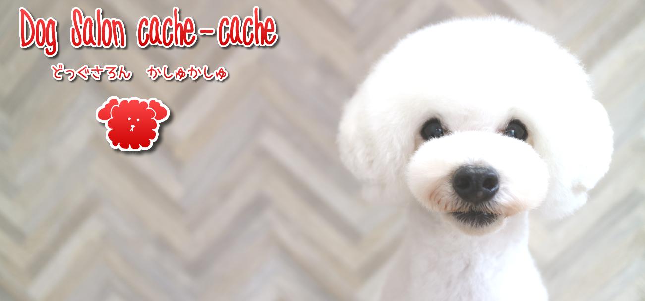 福岡市博多区 トリミング ドッグサロン ペットサロン プードルカット Dog Salon cache-cache