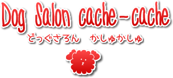 Dog Salon cache-cache